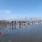 牛込海岸へ潮干狩りに行ってGETした貝たち