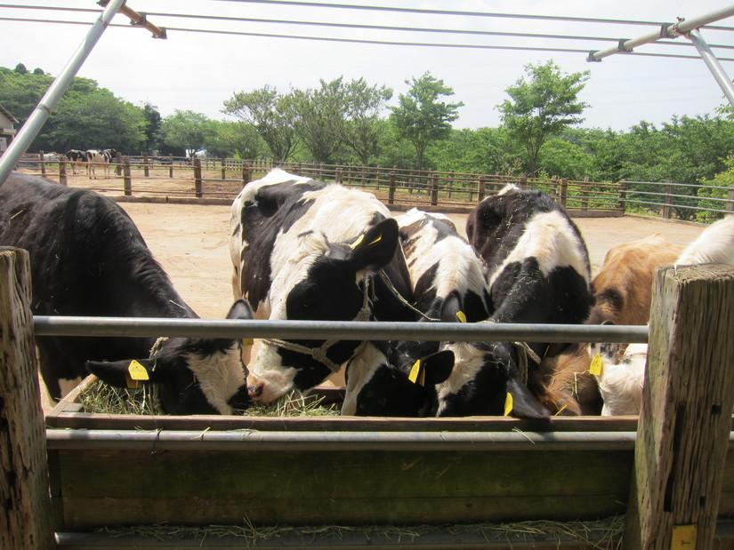 成田ゆめ牧場のキャンプ場と動物たちとの触れ合い(5月