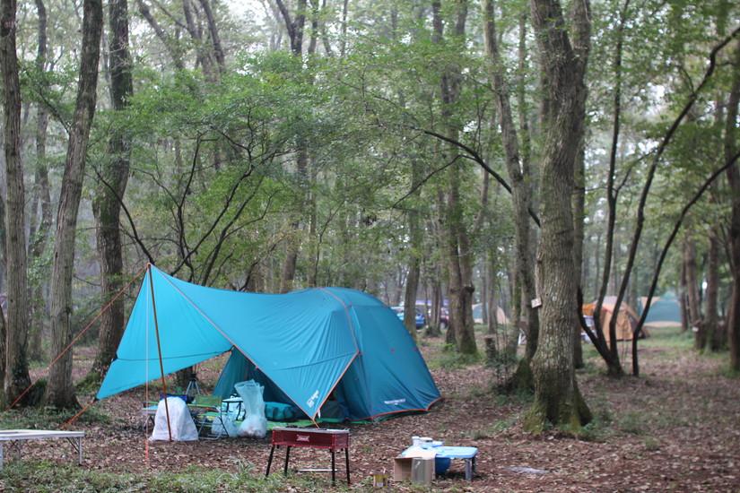 ホウリーウッズ久留里キャンプ村で森の動物に子供と遭遇しました(10月