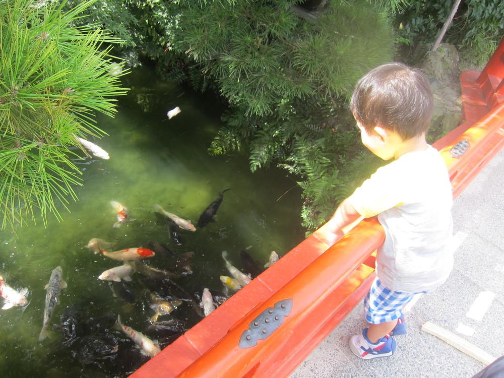 栗林公園の鯉に餌やり