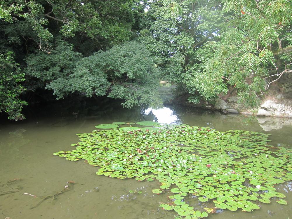 栗林公園蓮