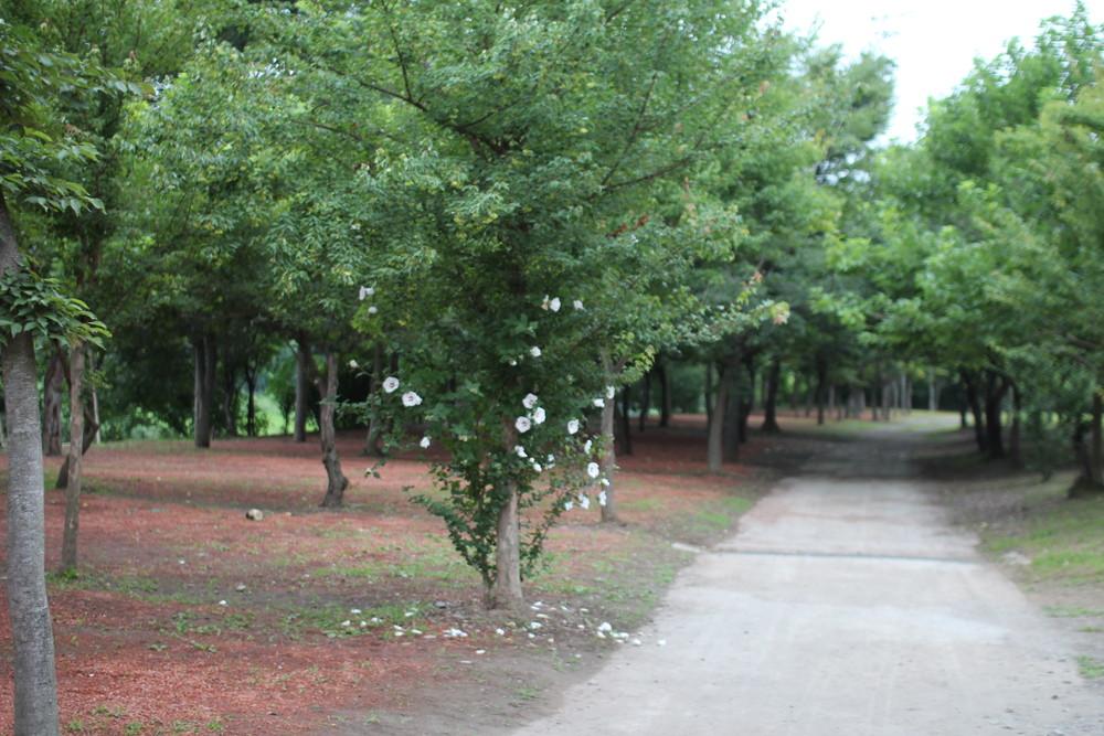 長瀞オートキャンプ場と長瀞ライン下り (56)