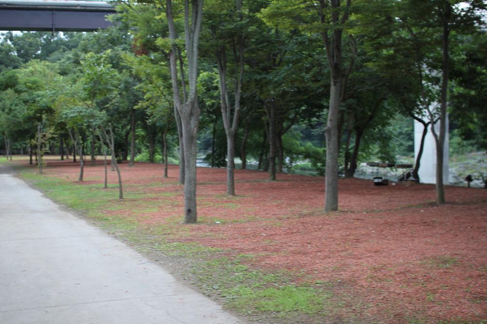 長瀞オートキャンプ場と長瀞ライン下り (57)