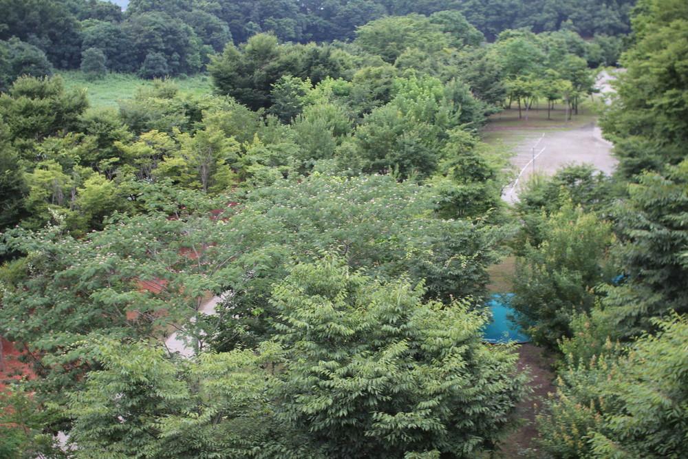 長瀞オートキャンプ場長瀞ライン下りB (7)