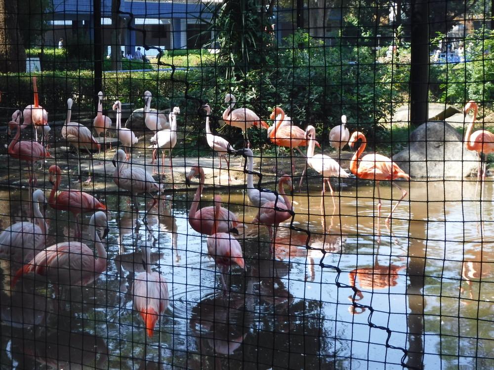 千葉市動物公園 フラミンゴ