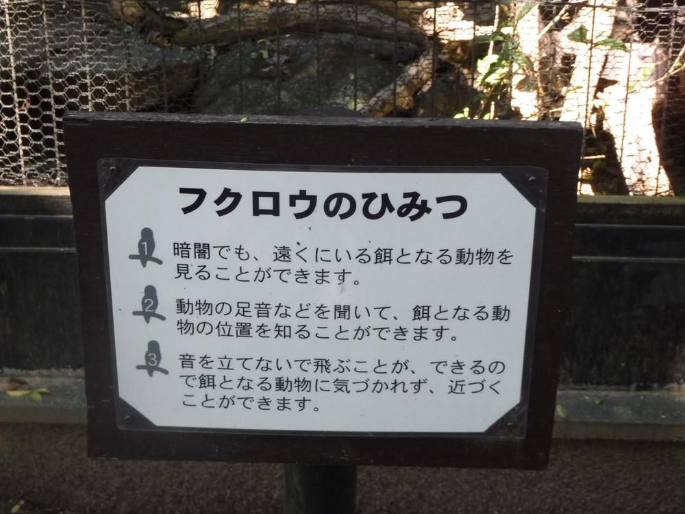千葉市動物公園 フクロウ
