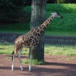 千葉市動物公園は見どころ満載!?
