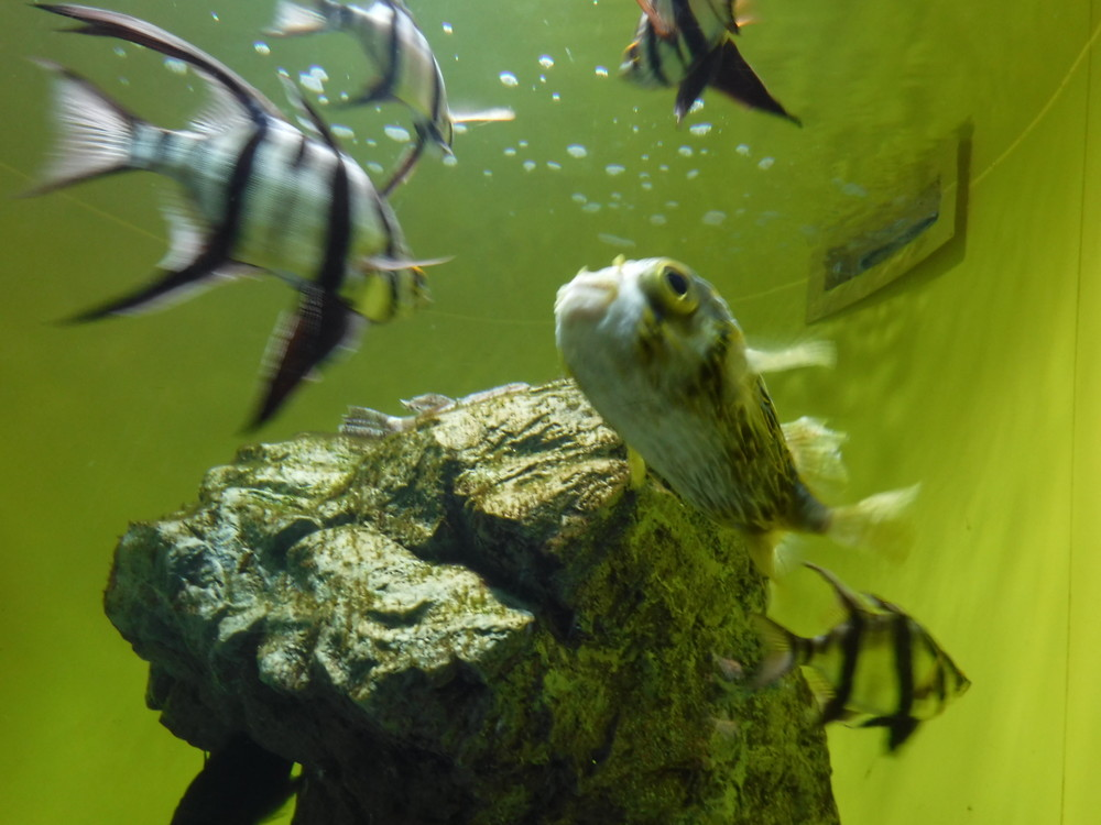 葛西臨海水族園 マグロ