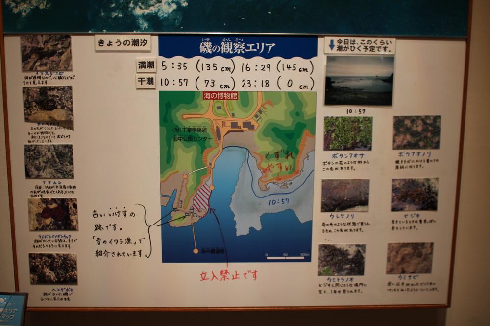 千葉県立中央博物館分館の海の博物館