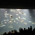 マグロ復活しとる!@葛西臨海水族園