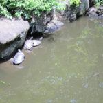 5月の御瀧不動尊の池