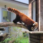 1歳8か月で動物園に行く@千葉市動物公園(風太君の)