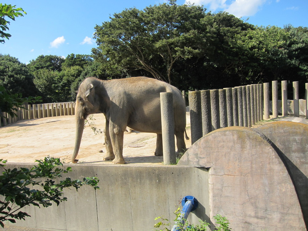 動物園 千葉市動物公園