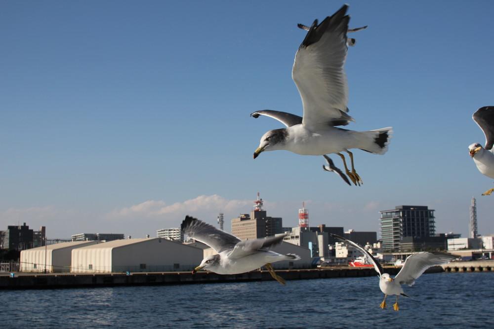 千葉県ポートタワーと遊覧船