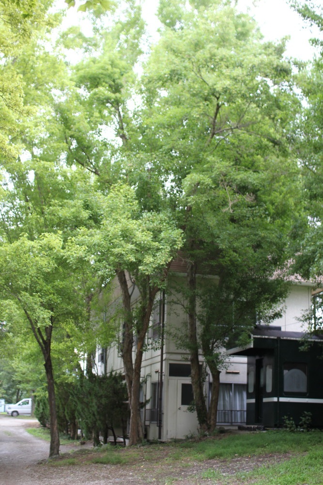 長瀞オートキャンプ場と長瀞ライン下り (17)