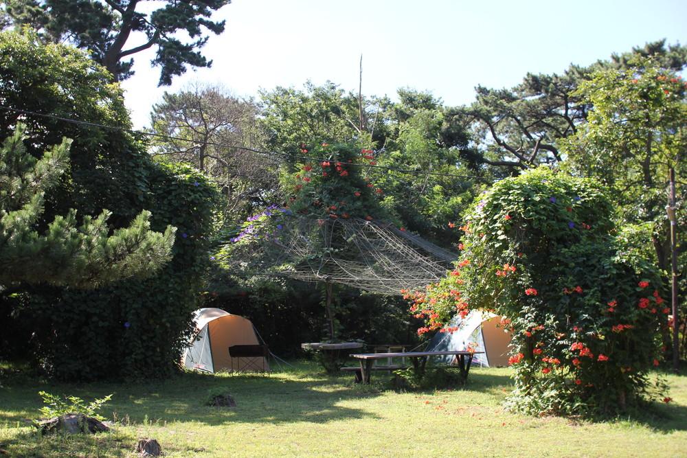 富津公園キャンプ場 (34)