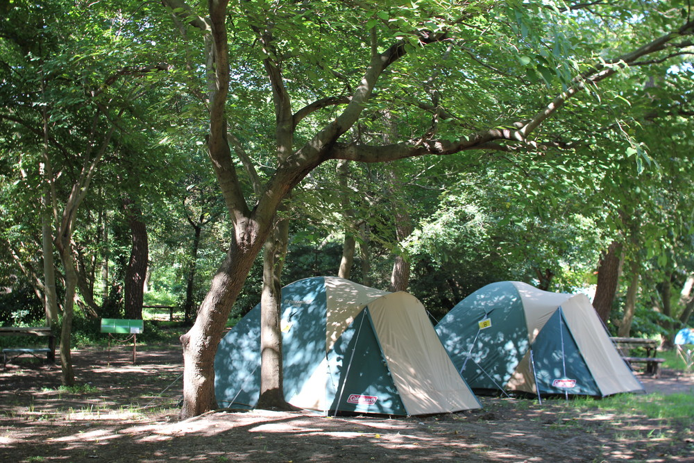 富津公園キャンプ場 (38)