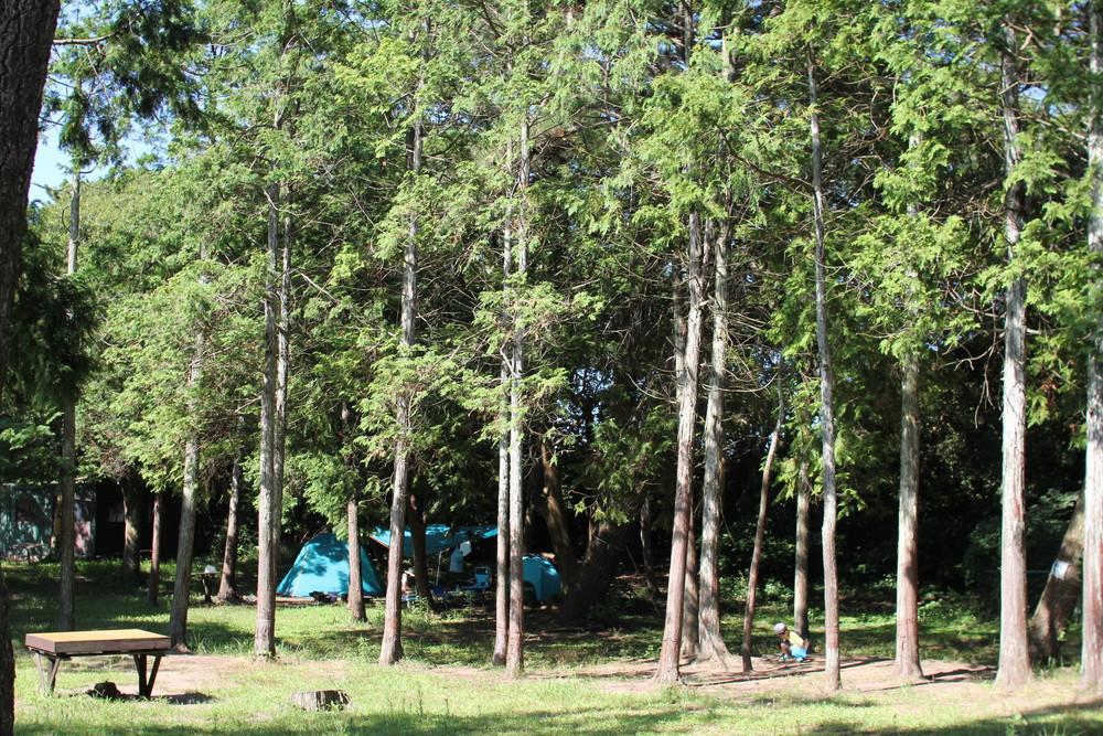 富津公園キャンプ場 (33)