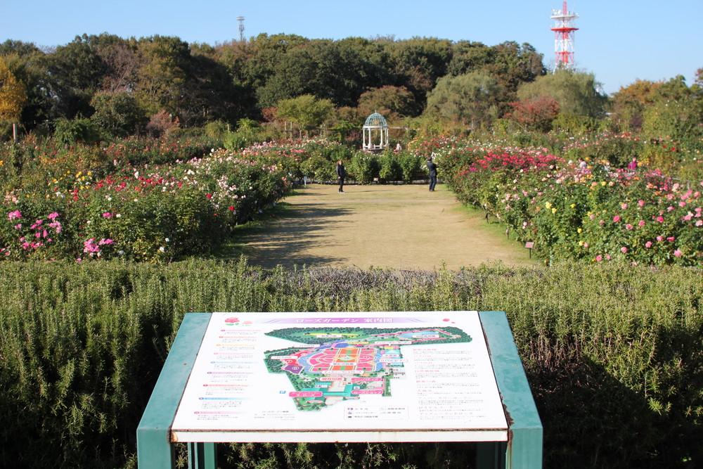 京成バラ園