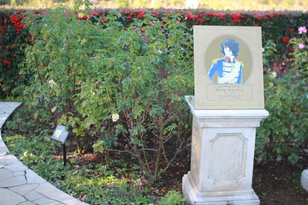 11月の京成バラ園開花情報アンドレグランディエとフェルゼン伯爵
