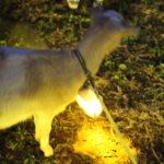 成田ゆめ牧場:ゆめの感謝祭2016にて10,000本の光のヒマワリ畑を見た結果(12月