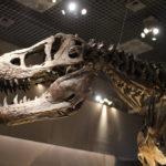 恐竜の化石を見に上野の国立科学博物館に行きました