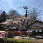 今年(2017年)の御滝不動尊・御滝公園のお花見状況