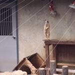 市川市の市川動植物園が安いから行ってみた