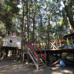 森の中のアスレチックで遊べる柏しょうなん夢ファームキャンプ場(11月