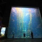 子連れ台湾旅行 国立海洋生物博物館の行き方・情報等@3月