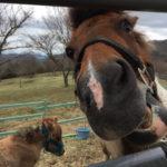 日光旅行 大笹牧場のアスレチックと牧場で遊んできた@5月GW